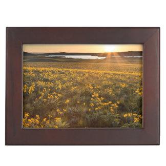 Stand Of Arrowleaf Balsamroot Wildflowers Keepsake Box