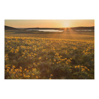 Stand Of Arrowleaf Balsamroot Wildflowers Wood Print