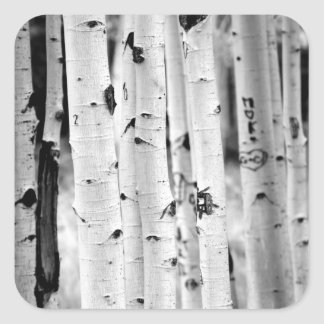 Stand tall Aspens Square Sticker
