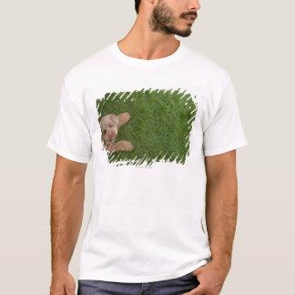 standard poodle 2 T-Shirt