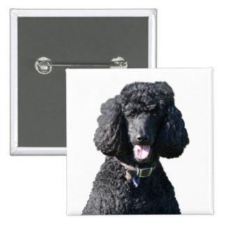Standard Poodle dog black beautiful photo portrait Buttons