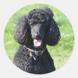 Standard Poodle dog black beautiful photo portrait Classic Round Sticker