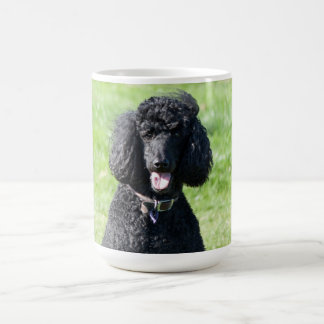 Standard Poodle dog black beautiful photo portrait Coffee Mug