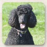 Standard Poodle dog black beautiful photo portrait Coaster