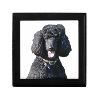 Standard Poodle dog black beautiful photo portrait Jewelry Box