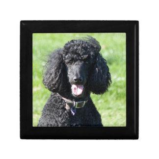 Standard Poodle dog black beautiful photo portrait Keepsake Box