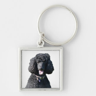 Standard Poodle dog black beautiful photo portrait Keychain