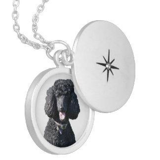 Standard Poodle dog black beautiful photo portrait Locket Necklace