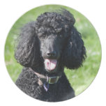 Standard Poodle dog black beautiful photo portrait Dinner Plates