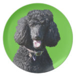 Standard Poodle dog black beautiful photo portrait Party Plates
