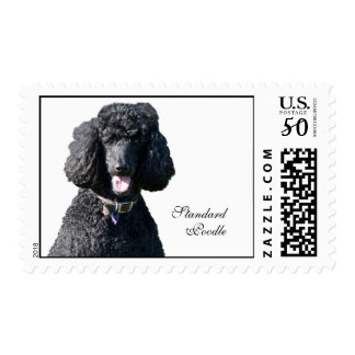 Standard Poodle dog black beautiful photo portrait Postage
