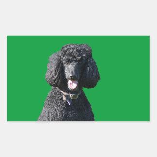 Standard Poodle dog black beautiful photo portrait Rectangular Sticker