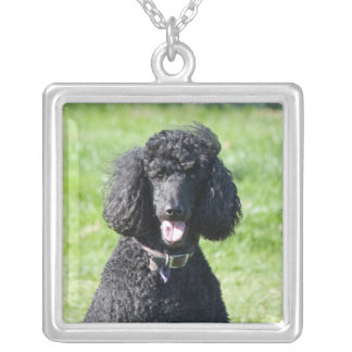 Standard Poodle dog black beautiful photo portrait Silver Plated Necklace