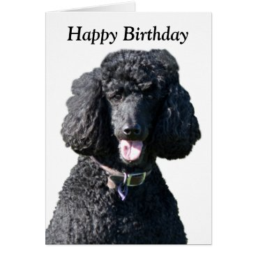 Customizable poodle birthday gifts kikihut roughcollie standard poodle dog photo happy birthday card bookmarktalkfo Gallery