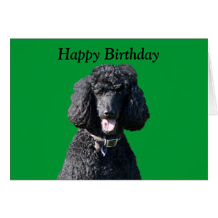 Birthday with black poodle cards greeting photo cards zazzle standard poodle dog photo happy birthday card bookmarktalkfo Gallery