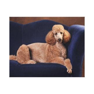 Standard Poodle on Blue Velvet Loveseat Canvas Prints