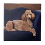 Standard Poodle on Blue Velvet Loveseat Small Square Tile