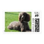 Standard Poodle Postage Stamps
