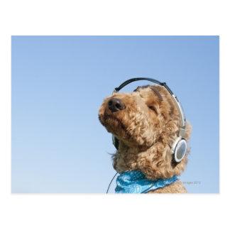 Standard Poodle Postcard