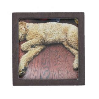 Standard Poodle Sleeping on Floor Premium Gift Box