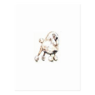 Standard Poodle White Postcard