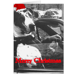 Standard sized Christmas greeting cards, Dalmation Card