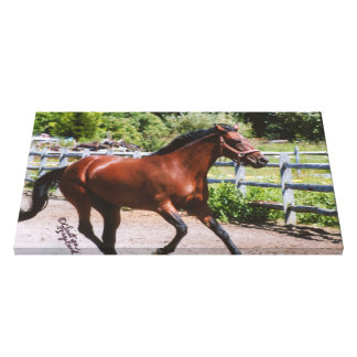 Standardbred galloping Stretched Canvas Print