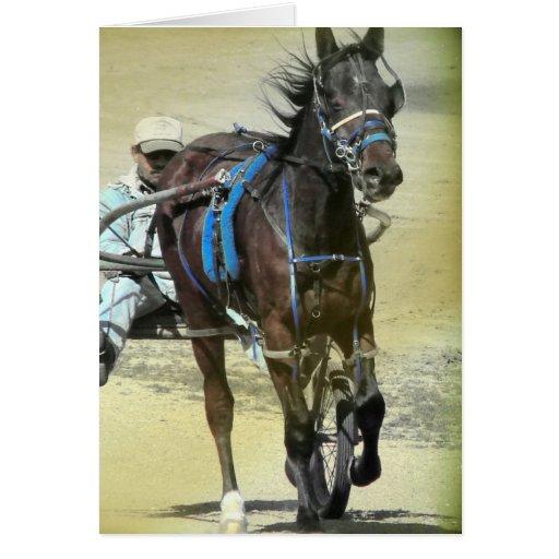 Standardbred Race Horse Greeting Card