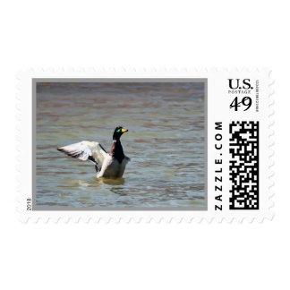 Standing Bear Lake Single Mallard Custom Postage