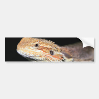 Standing Bearded Dragon Bumper Stickers