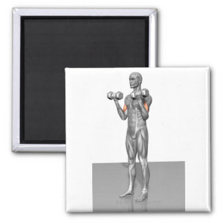 Standing Biceps Curl 2 2 Inch Square Magnet