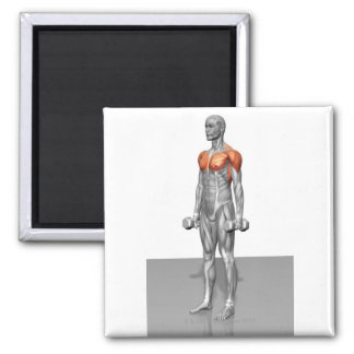 Standing Biceps Curl 2 Inch Square Magnet