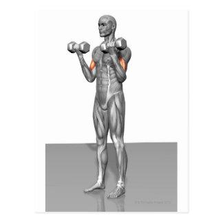 Standing Biceps Curl 2 Postcard