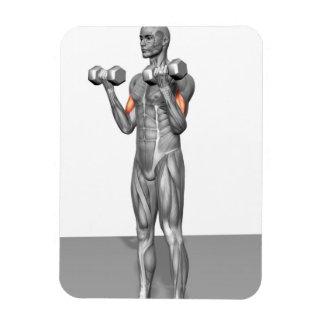 Standing Biceps Curl 2 Rectangular Photo Magnet