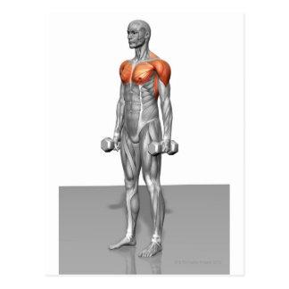 Standing Biceps Curl Postcard