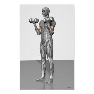 Standing Biceps Curl Poster