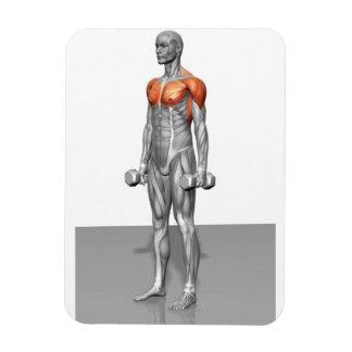 Standing Biceps Curl Rectangular Photo Magnet