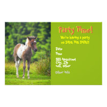Standing Dartmoor Pony Foal flyer invites