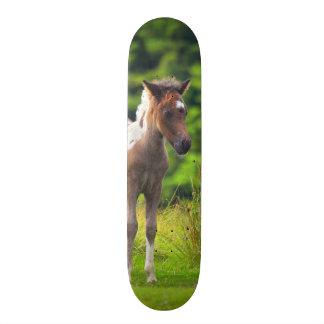 Standing Dartmoor Pony Foal skateboard