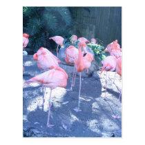 Standing Flamingo Postcard