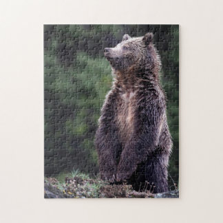 Standing Grizzly Bear Jigsaw Puzzle