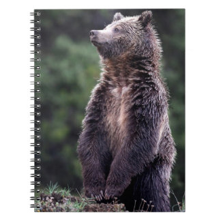 Standing Grizzly Bear Spiral Note Books