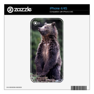 Standing Grizzly Bear Decals For The iPhone 4S