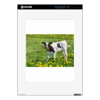 Standing newborn calf in meadow with yellow dandel decal for iPad