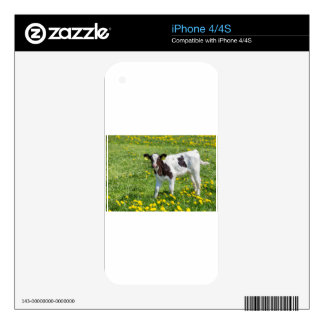 Standing newborn calf in meadow with yellow dandel decals for the iPhone 4