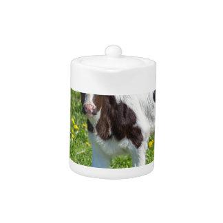 Standing newborn calf in meadow with yellow dandel teapot