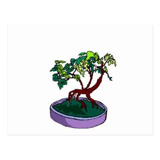 Standing On Root Elm Like Bonsai Tree Postcard