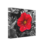 Standing Out Gallery Wrap Canvas