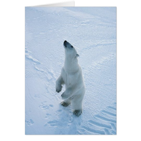 Standing Polar Bear Card