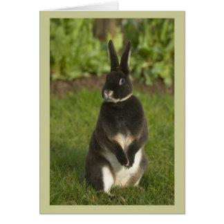 Standing Rex Rabbit Card